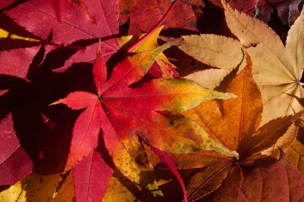 Livres : des romans énormes et passionnants pour l'automne